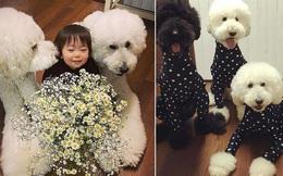 Chỉ ở nhà chăm sóc cháu và chơi với chó, bà ngoại vẫn thu hút hơn 560 nghìn người theo dõi trên MXH nhờ những hình ảnh quá sức dễ thương