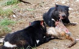 1001 thắc mắc: Loài thú nào ăn nhiều mà không sợ béo?