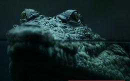 """Cuộc đi săn mồi của cá sấu và bài học khởi nghiệp: Dùng """"thuật"""" ẩn mình để tìm thị trường ngách, tấn công chớp nhoáng chinh phục thị trường"""