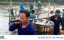 Tín hiệu đáng mừng trong xuất khẩu cá tra thời hậu Covid-19