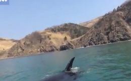 Video: Khoảnh khắc 3 cá voi sát thủ vây quanh người chèo thuyền