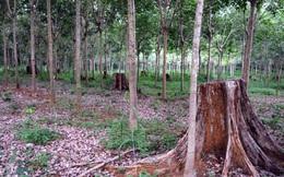 Vụ án 'khủng' ở Lâm Đồng: Gần 200 ha rừng 'bốc hơi' như thế nào?