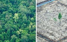 Cảnh báo đáng sợ: Sau khi hết Covid-19, rừng Amazon sẽ là nguồn lây nhiễm virus corona kế tiếp và lỗi hoàn toàn nằm ở con người