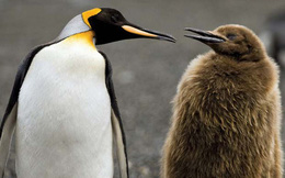 Hít phải quá nhiều... mùi phân chim cánh cụt, nhà khoa học Nam Cực đang có phản ứng rất lạ và lý do phía sau khiến ai cũng phải bật cười