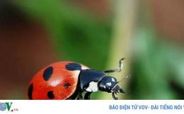 8 cách đuổi côn trùng khỏi nhà nhanh chóng