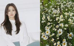 Hành động bất thường của Song Hye Kyo sau khi bị tung bằng chứng tái hợp Hyun Bin, thời điểm ly hôn Song Joong Ki cô cũng làm điều tương tự