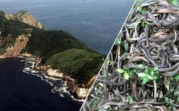 Mỗi mét vuông 5 con rắn độc bậc nhất hành tinh: Hòn đảo nguy hiểm nhất thế giới, cấm tuyệt đối con người bén mảng tới
