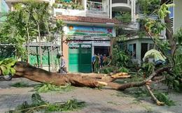 Bộ trưởng chia buồn với gia đình học sinh bị vụ tai nạn đổ cây tại trường THCS Bạch Đằng