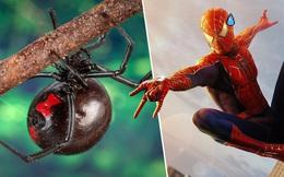 3 anh em tự cho con nhện độc nhất thế giới cắn để biến thành Spider-man