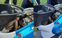 Không khởi động được xe điện, người đàn ông hú vía khi phát hiện vật thể dài ngoằng đang cuộn mình trong cốp