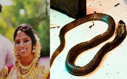 """Sợ phải trả lại của hồi môn sau khi ly dị vợ, gã chồng bội bạc âm mưu """"đuổi cùng giết tận"""", cho rắn độc cắn chết vợ"""