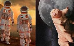 Vì sao con người cần lai tạo với sinh vật được mệnh danh là 'quái vật bất tử' nếu muốn sống trên Sao Hỏa?