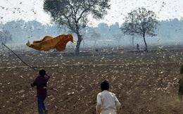 Video: Thảm họa châu chấu tồi tệ nhất trong 27 năm đang tàn phá Ấn Độ