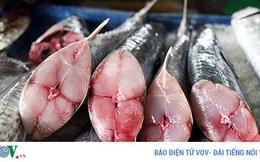 Những loại cá cực tốt cho sức khỏe