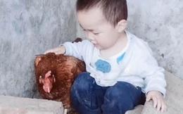 Thấy con suốt ngày đòi vào chuồng gà chơi, người mẹ bí mật đi theo rồi giật mình phát hiện con trai quá thông minh