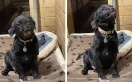 Nhe răng cười toe toét mỗi lần có người đến nhận nuôi, chú chó ở trạm cứu hộ động vật khiến trái tim cộng đồng mạng tan chảy