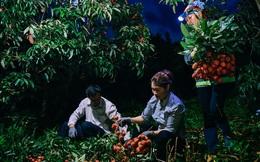 """Lần đầu vào tận vườn vải xem cảnh người nông dân soi đèn pin đi thu hoạch khi trời còn tối mịt vì """"sợ vải chết ngộp"""""""