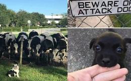 Giải trí nhanh với 12 chú chó cực buồn cười