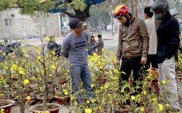 Hoa Tết giá chục triệu đồng nở rộ trên phố