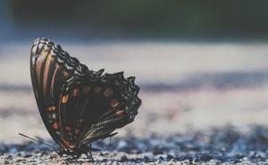 """Đời người lụi bại hay thăng hoa không nằm ở số mệnh, có một công thức xoay chuyển mọi sự mang tên """"Hiệu ứng cánh bướm"""""""
