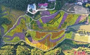 """Trầm trồ trước """"biển hoa"""" cầu vồng tại Trung Quốc - điểm đến du lịch hot nhất nhì mùa thu"""