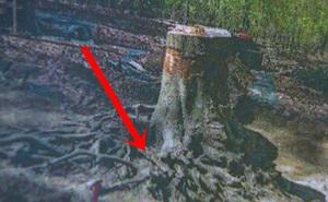 """Máy bay nổ khiến phi công thiệt mạng nhưng không tìm thấy xác, 70 năm sau người ta sững sờ phát hiện hài cốt """"chìm"""" dưới rễ cây một cách kì ảo"""