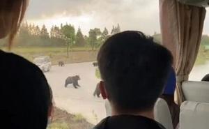 Nhân viên vườn thú bị gấu cắn xé đến chết trước mặt du khách ở Trung Quốc