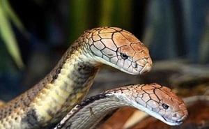 """Giải mã """"đầu rắn"""" 9.000 năm tuổi trong mộ cổ Kenya"""