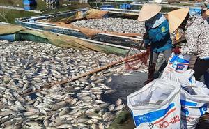 Khoảng 30 tấn cá chết hàng loạt bất thường