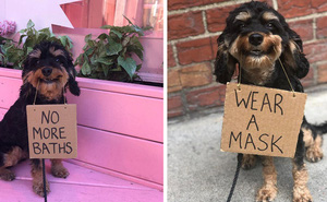 """Chú chó nổi tiếng vì những thông điệp """"lầy lội"""" gửi tới con người, mặt luôn hớn hở thay ngàn lời muốn nói"""