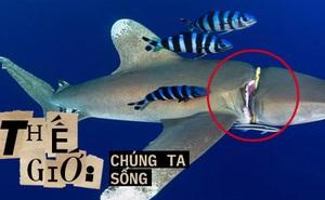 Cá mập thắt cổ, cá voi dạt bờ...: Chùm ảnh cho thấy bi kịch dưới đại dương đang trở nên đáng sợ đến mức nào