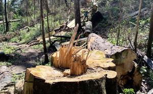 Rừng nguyên sinh bị tàn phá, gỗ lậu lọt vào nhà... Tổ trưởng bảo vệ rừng