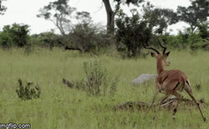 """Video: Định lao tới cướp mồi, bầy chó hoang """"chưng hửng"""" vì điều gì?"""