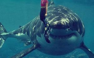 Nữ du khách 38 tuổi bị 200 con cá mập vây quanh khi đang lặn biển