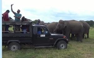 Clip: Đàn voi hoang dã chen nhau xếp hàng chụp ảnh tự sướng cùng khách