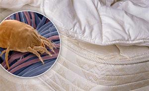 Chuyên gia cảnh báo: Hàng triệu sinh vật giấu mặt ngay trong giường ngủ nhà bạn là thủ phạm gây nhiều bệnh