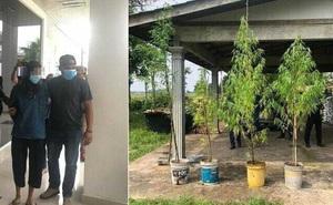Bị bắt vì trồng cần sa trước nhà, thanh niên gân cổ cãi đấy là... cây tre!