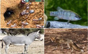1001 thắc mắc: Loài vật nào chịu nóng giỏi nhất quả đất?
