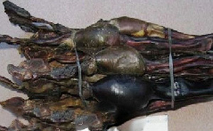 Hải cẩu thận - Vị thuốc trị bệnh đàn ông