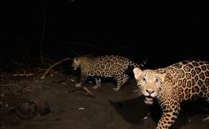 Đầu tư của TQ: Kẽ hở khiến động vật hoang dã bị săn lùng từ châu Phi đến Nam Mỹ