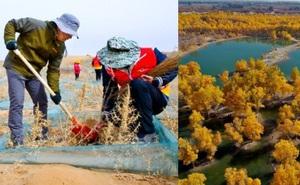 40 năm cặm cụi trồng rừng nơi cát sỏi, người phụ nữ biến hoang mạc thành thiên đường 10 vạn cây xanh