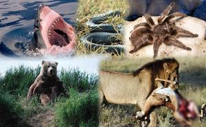 1001 thắc mắc: Những 'sát thủ' săn mồi nào đáng sợ trong thế giới động vật?