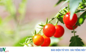 7 loại thực phẩm người bị vẩy nến cần tránh xa