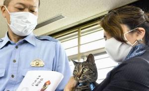 Phát hiện mèo hàng xóm có những hành động lạ lùng, người phụ nữ đi theo xem thử rồi may mắn cứu được một mạng người