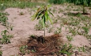 Ecosia - công cụ tìm kiếm 'phủ xanh Trái Đất' vừa trồng thành công cây thứ 100 triệu