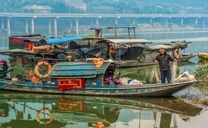 TQ cấm đánh bắt cá 10 năm trên sông Dương Tử: 30 vạn lao động mất việc và câu trả lời của chính quyền