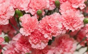 Trắc nghiệm vui: Bạn đại diện cho loài hoa nào, loài hoa mang hương thơm hay mang sắc đẹp?
