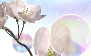 Thụ phấn bằng… bong bóng xà phòng