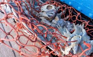 100 tấn rác - phát hiện đau lòng trong đợt thu dọn đại dương lớn nhất lịch sử: Con người đã đối xử quá tàn nhẫn với Trái đất rồi