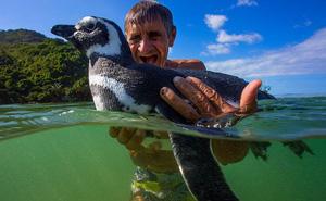 """Những sự thật thú vị về chim cánh cụt khiến bạn phải """"ố á"""", hóa ra loài vật dễ thương này còn có cả kho tàng chuyện hài hước"""